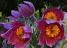 Blumen und Pflanzen_11