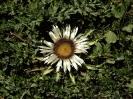 Blumen und Pflanzen_12