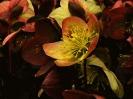 Blumen und Pflanzen_14