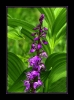 Blumen und Pflanzen 2013_1