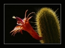 Blumen und Pflanzen 2013_2