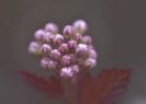 Blumen und Pflanzen_4
