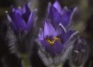 Blumen und Pflanzen_6