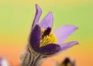 Blumen und Pflanzen_7
