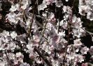 Blumen und Pflanzen_9