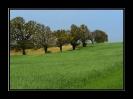 Landschaft 2013_12